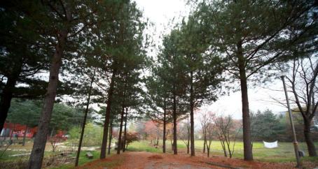 屯内自然休養林